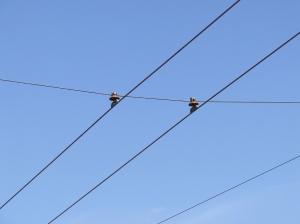 Тролейбусна лінія